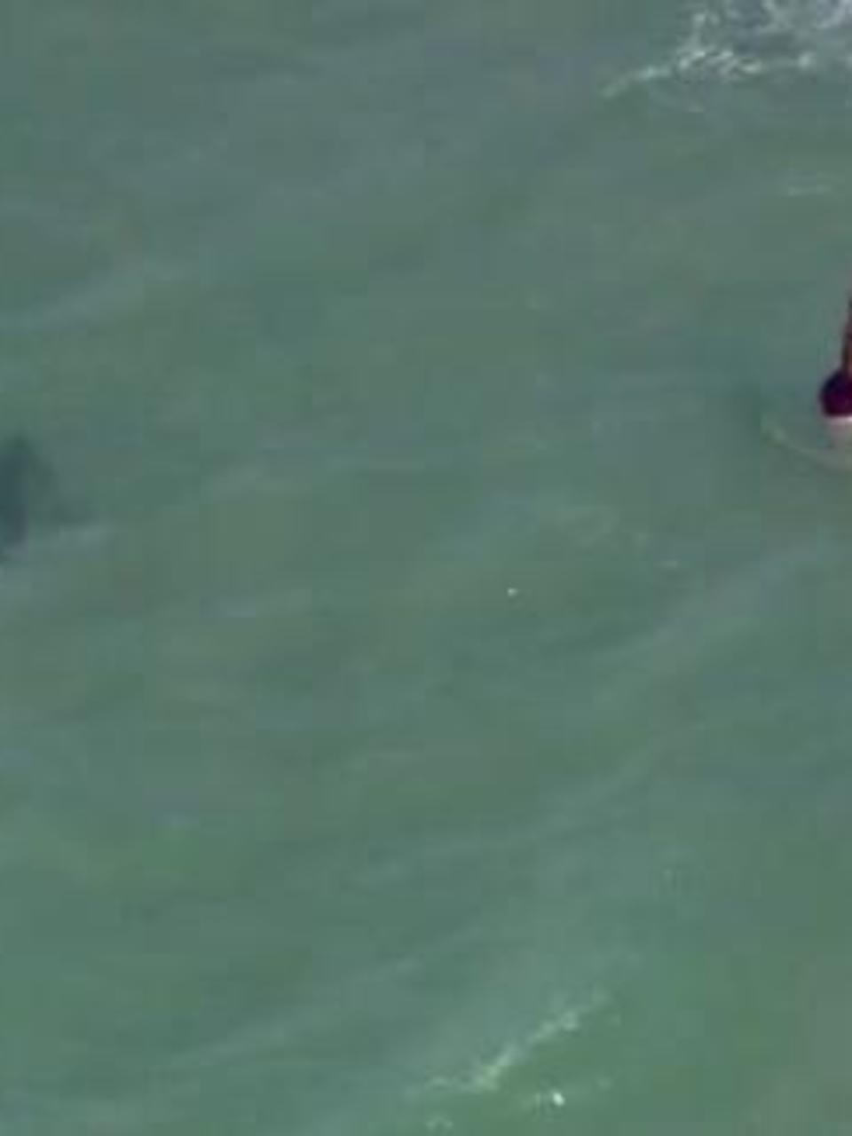 Shark Close Call At Daytona Beach Wpec